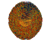 Network Graph -  Peer to Peer File Sharing Network Zoomed In - Reds